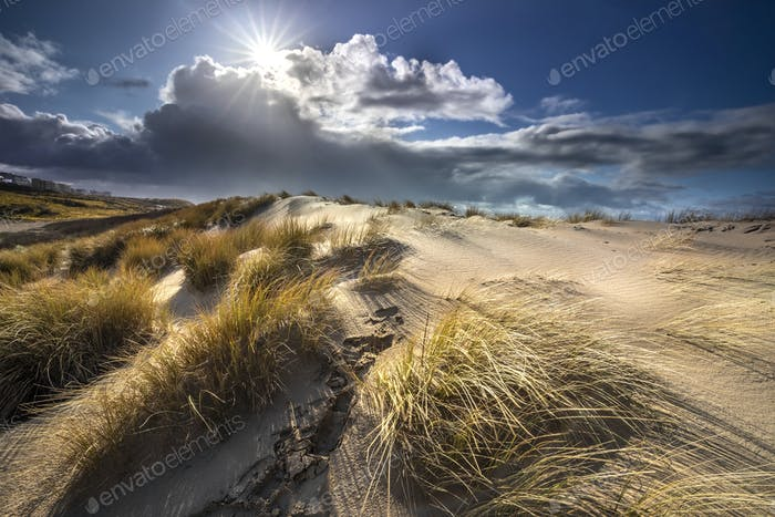 sunlight over sand dunes in summer