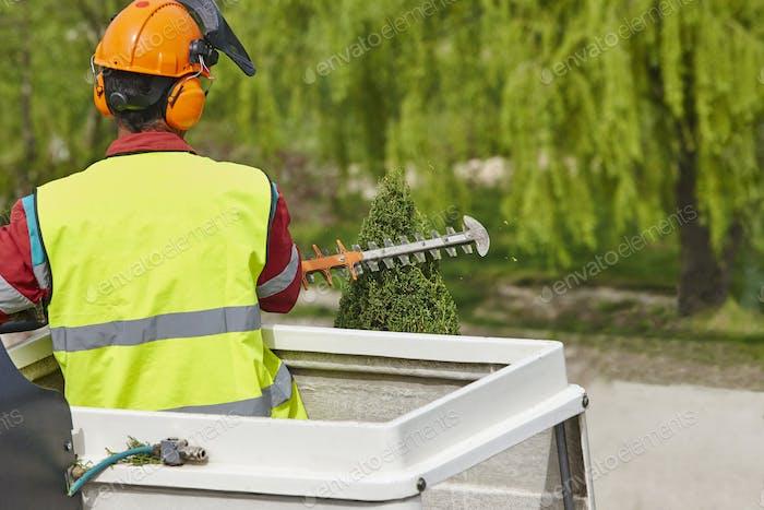 Trabajador equipado podar un Árbol en una grúa. Trabajos de jardinería