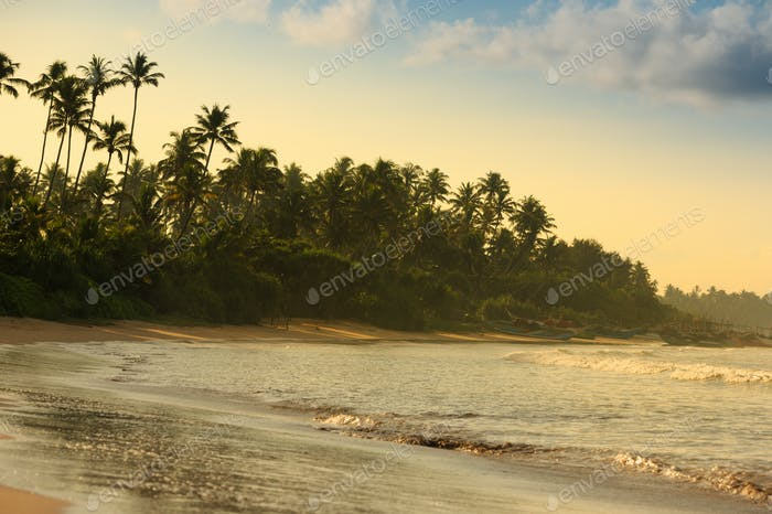 beautiful tropical beach with palm trees in the morning