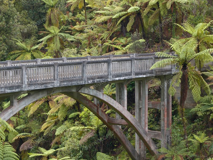 Lonely jungle bridge
