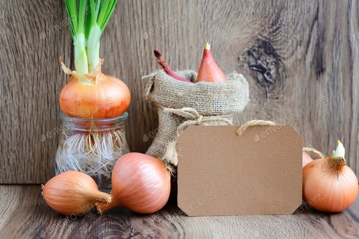 Blank paper sticker with colorful onions on rustic wooden backgr