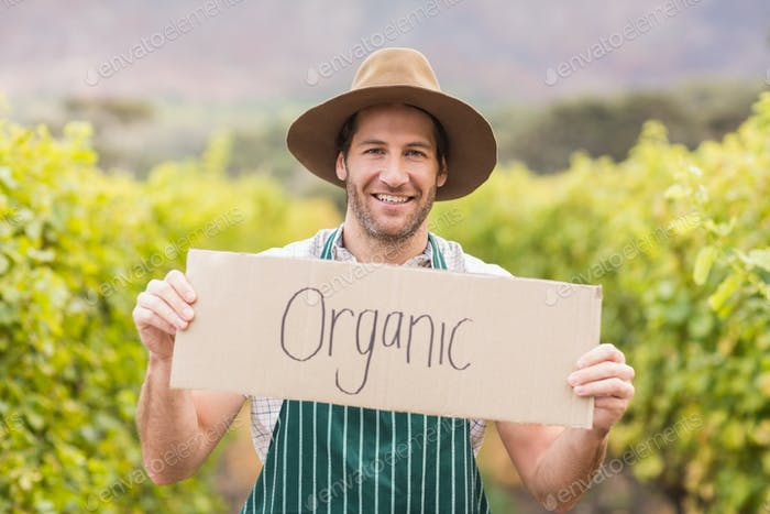 Junge glückliche Winzer hält ein Zeichen in der Traubenfeld