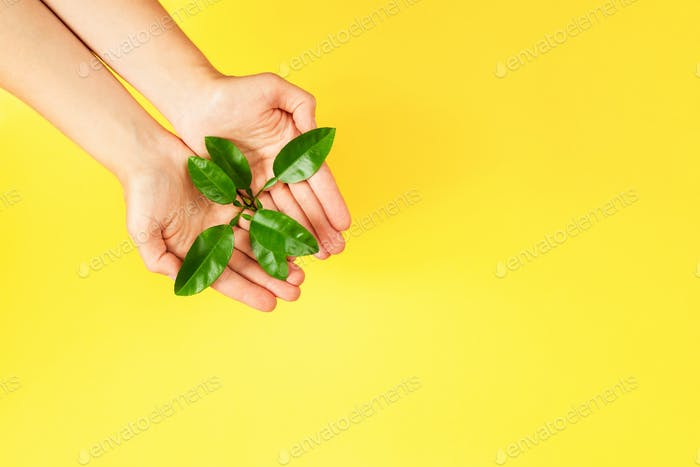 Female Hands Holding Green Plant on Yellow Background.