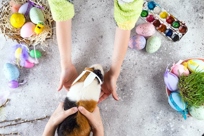 Guinea pig with the ears of the Easter bunny in children's hands against the background of