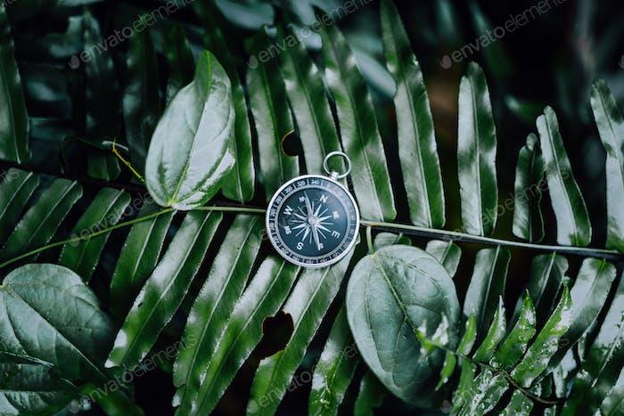 Kompass unter Farnblättern in einem tropischen Dschungel. Abenteuerentdeckungs-Navigationskonzept