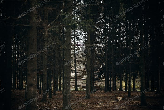 Autumn forest in Scandinavian national park resort