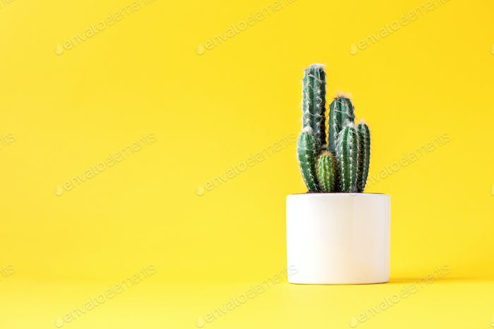 Cactus on bright yellow background.Trendy abstract style.