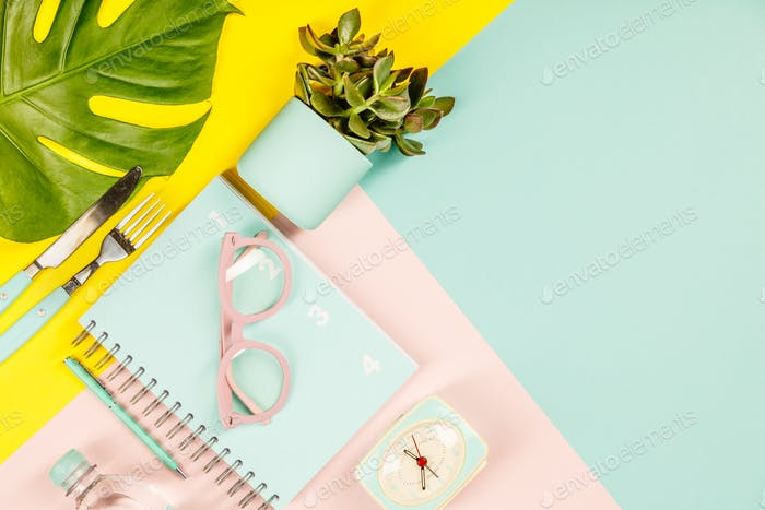 Succulents on pastel colors background. Flat lay, copy space