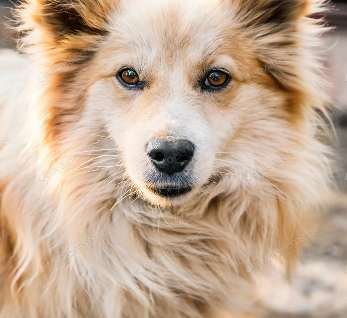 Portrait of a beautiful dog