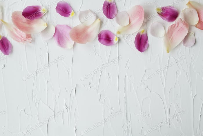 Scattered flower petals