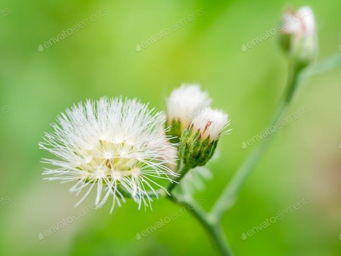 Macro shot of the grass flower