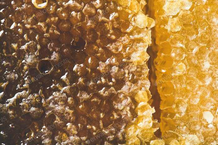 Bee honeycomb texture, wallpaper and background, top view, close-up