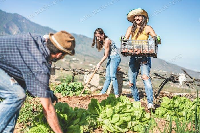 Trabajo en equipo cosecha de verduras frescas en el invernadero Comunidad
