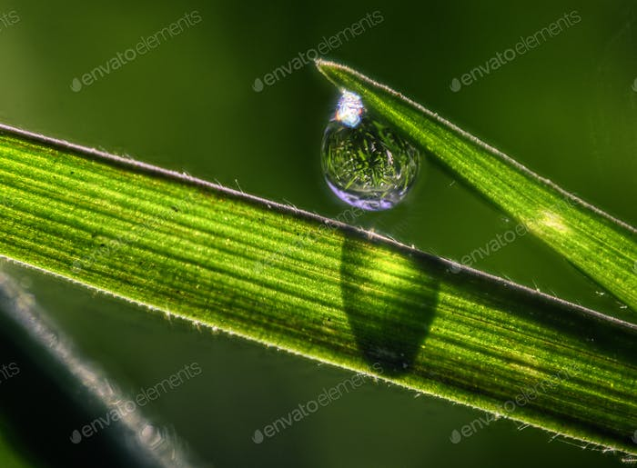 One Dew Drops Closeup and Grass Blades