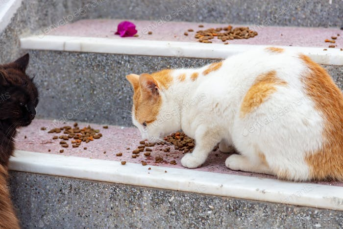 Two domestic Aegean cats eat on house stairs Paros island, Naoussa village Cyclades, Greece.