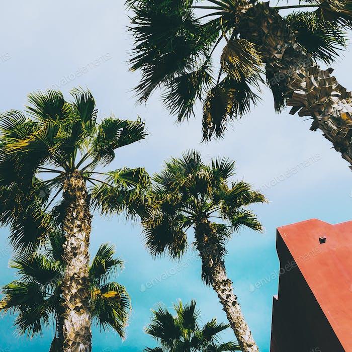 Palms. Tropical location. Travel Minimal  fashion