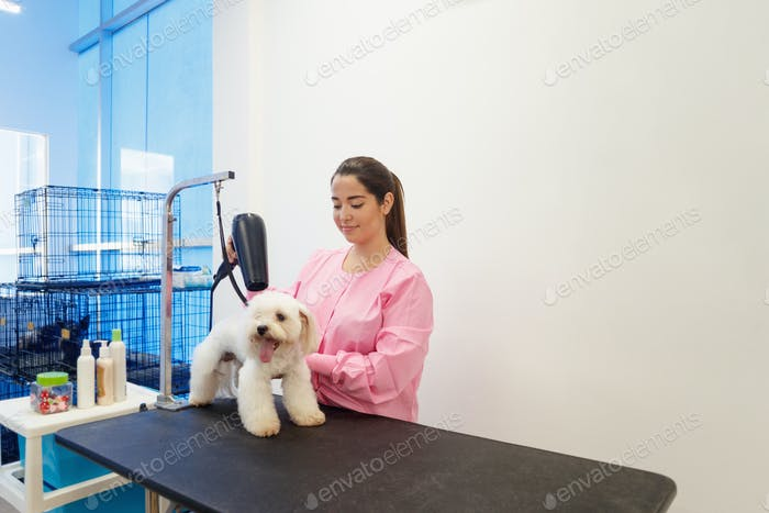 Женщина на работе в магазине домашних животных и уход за собакой