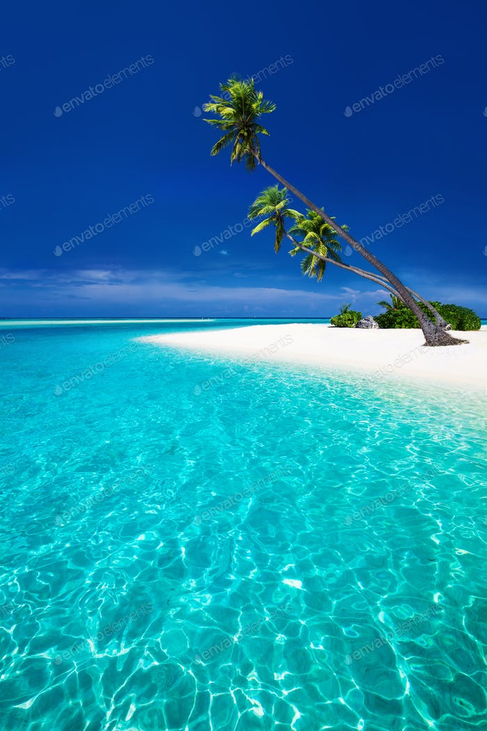Beach on a tropical island with palm trees overhanging lagoon