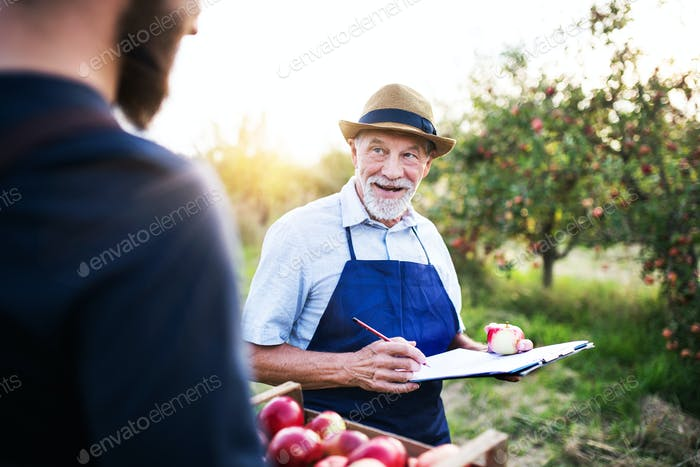 Thumbnail for A senior man with son picking apples in orchard in autumn.