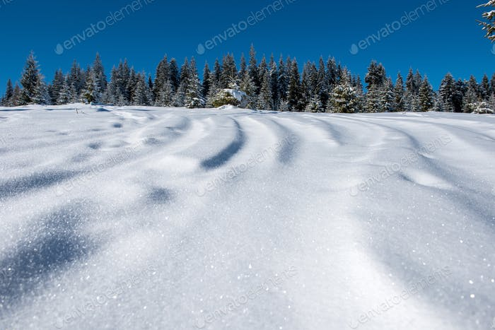 Freeride ski and snowboard tracks in powder snow