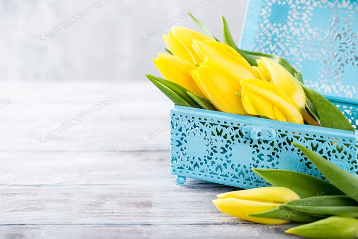 Yellow tulips in blue metal box