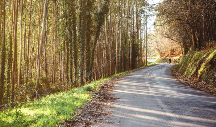 Forest road landscape with couple riding motorbike