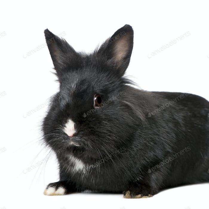 Rabbit (7 months)