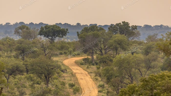 Dirt road S4 through savanna