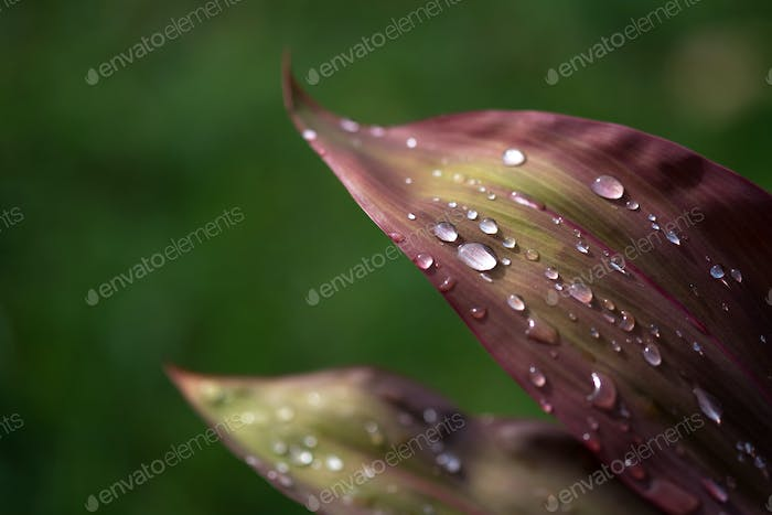 Close-up view of raindrops on leaf
