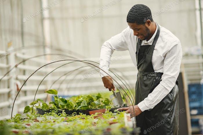 Gärtner transplantiert Pflanze mit einer Gartenkelle