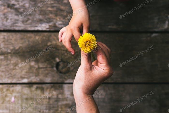 Eltern und Kind Hände Hand Hand Hand Blumen