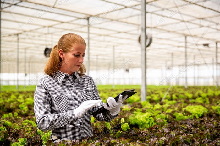 Working woman taps something on a tablet near a salad plantation