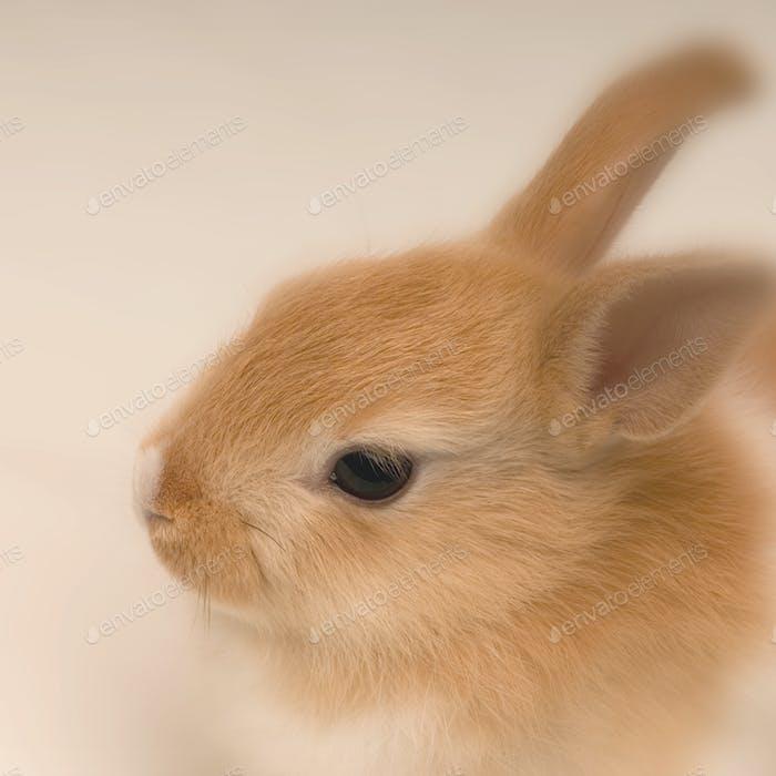rabbit looking straight ahead