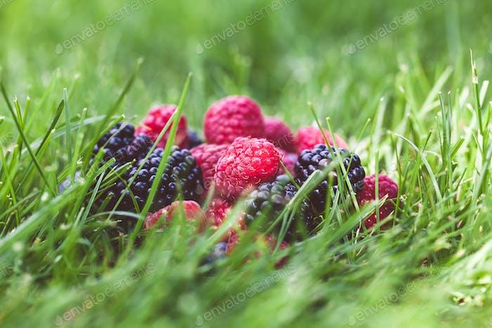 Sommerbeerenfrüchte in grünem Gras Hintergrund