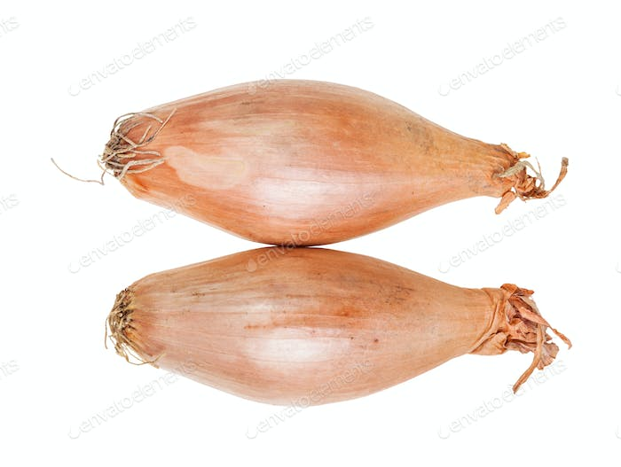 top view of two bulbs of shallot onion isolated