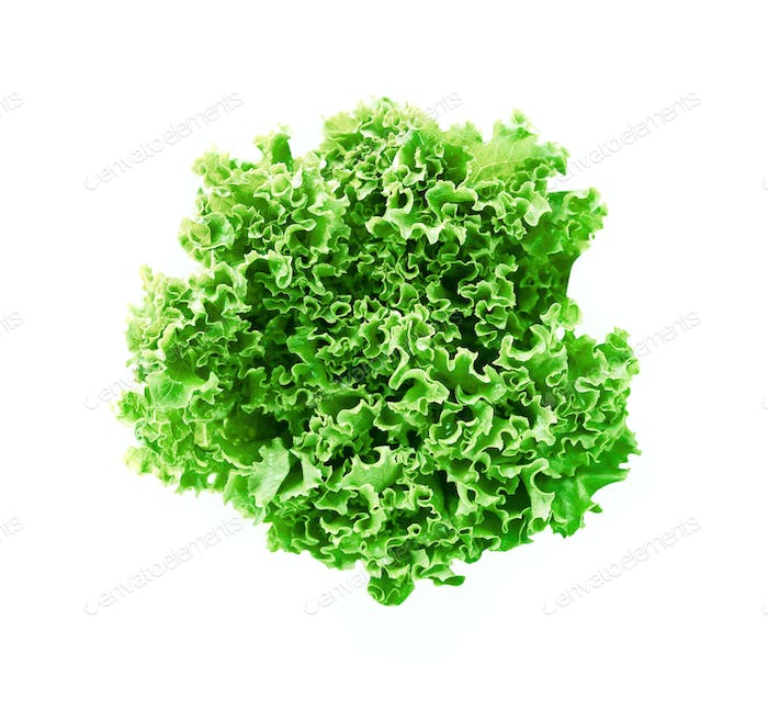 green leaves lettuce isolated