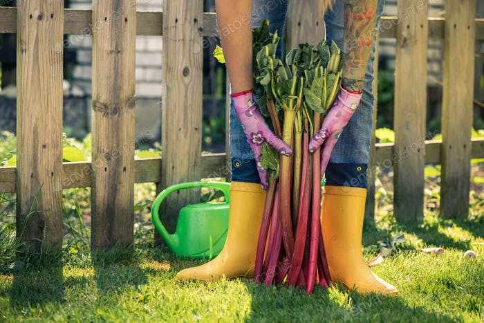 Gardener in yellow wellies holding rhubarb