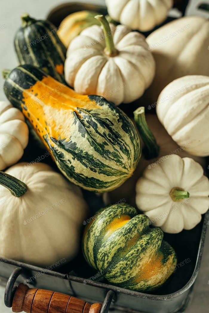 Different pumpkins close-up