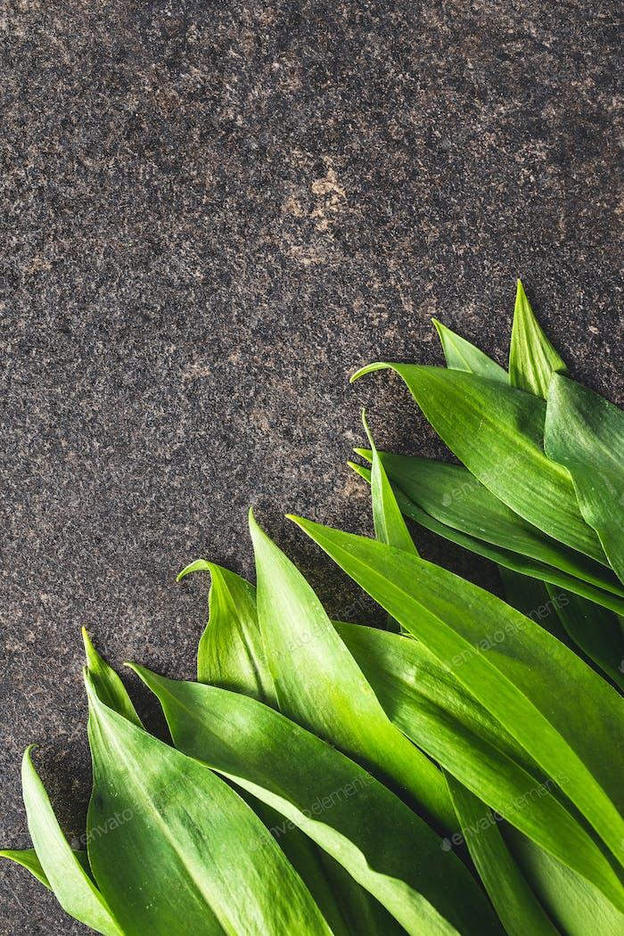 Grüne Bärlauch Blätter. Ramsons Blätter auf schwarzem Tisch.