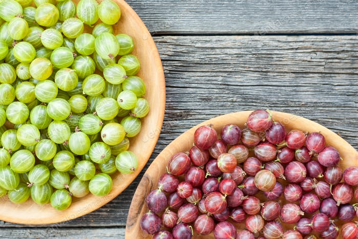 Freshly harvested gooseberries
