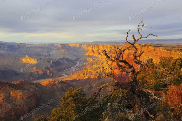 Grand Canyon at the sunset with colorful cliffs and dead tree, Colorado river