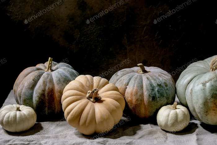 Colorful pumpkins collection on linen tablecloth. Dark still life