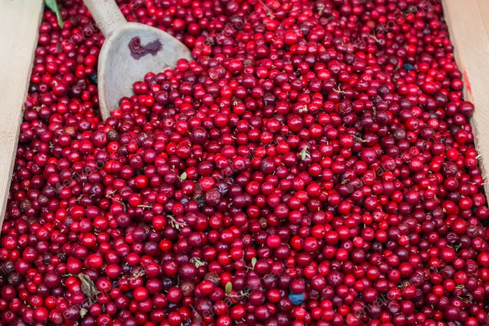 Fresh forest lingenberries at the market stall