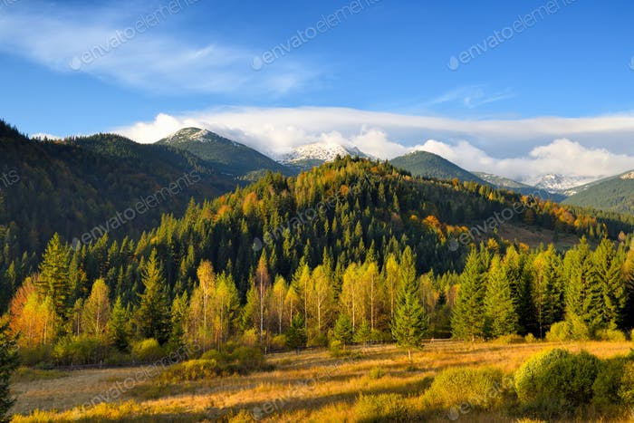 Amazing mountain landscape with colorful trees and herbs