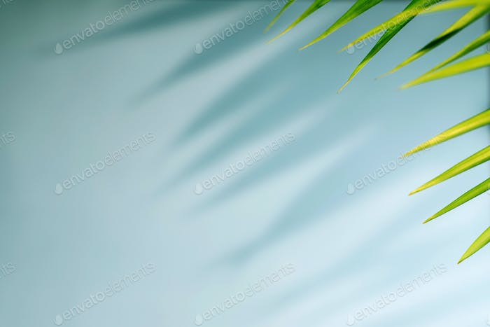 Tropical palm leaves with shadow on blue background.