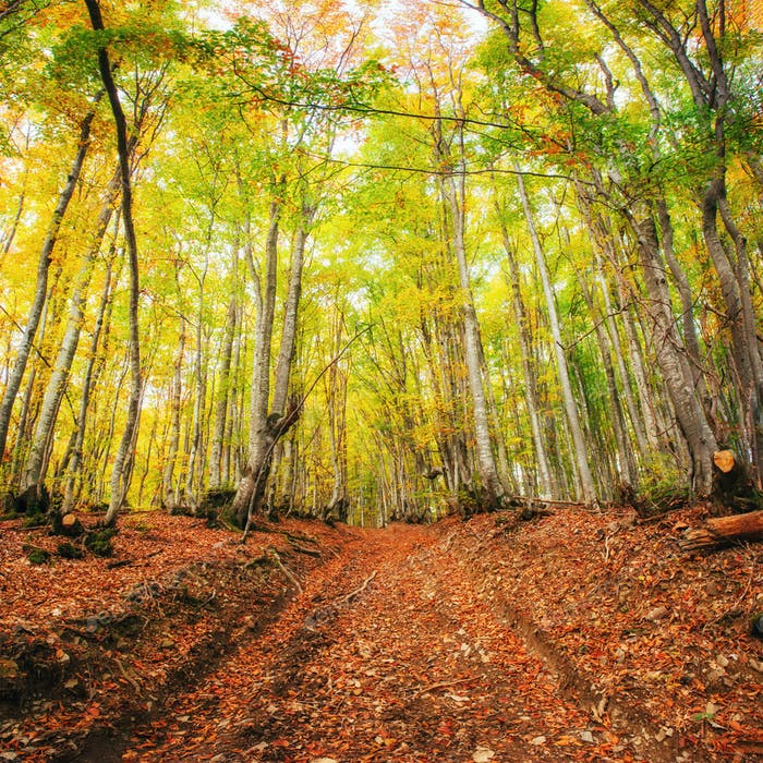 Waterfall in autumn sunlight. Beauty world. Carpathians. Ukraine. Europe