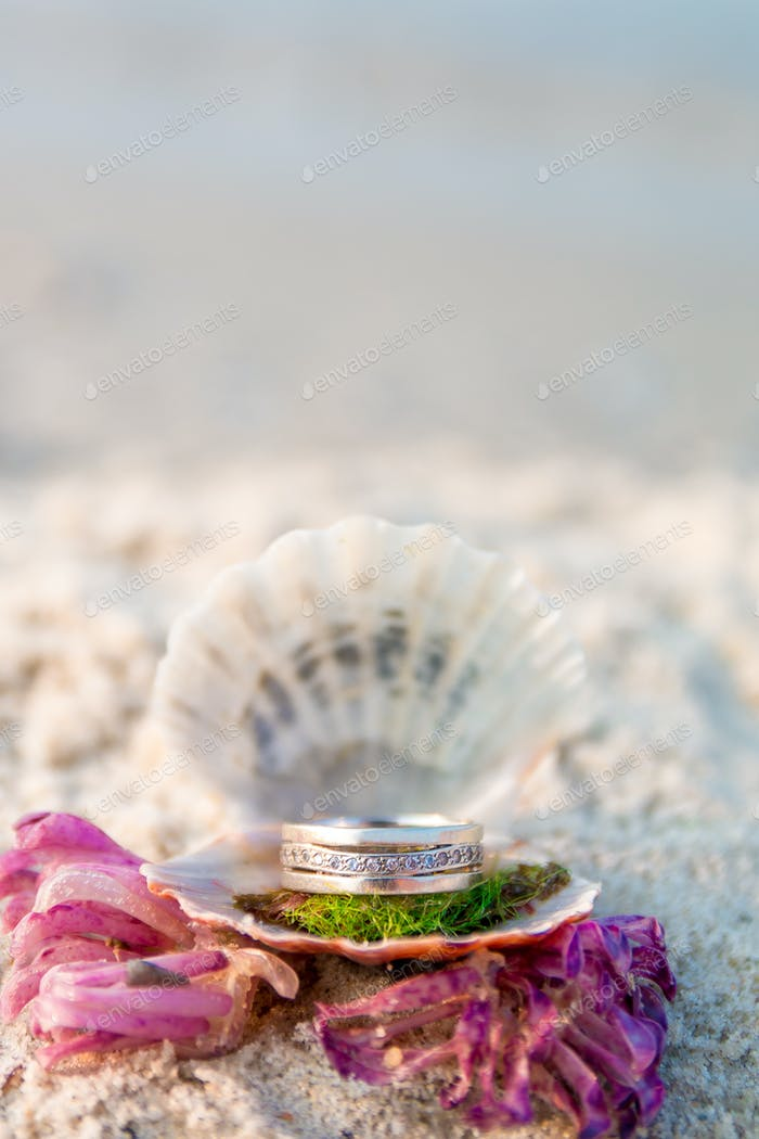 Engagement ring in open seashell on the ocean beach. Copy space. Frame.