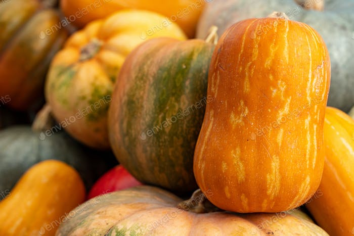Background of a lot of colorful pumpkins