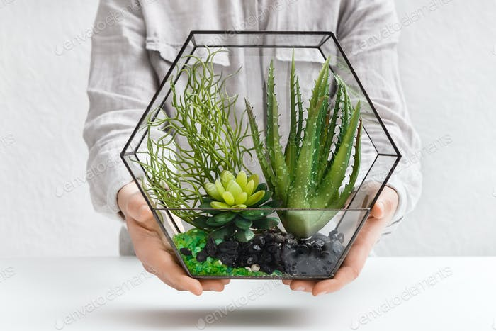Woman holding mini succulent garden in glass florarium