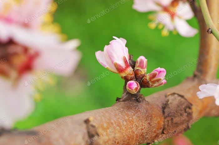 Frühlingsblüte auf Baum.